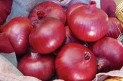 Chianti F1 Hybrid Red Onion Seeds