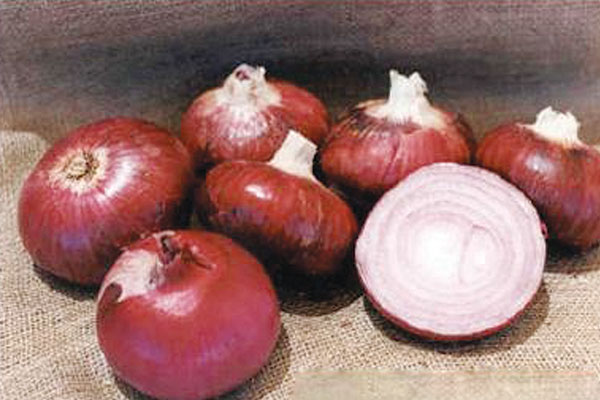 Desert Sunrise F1 Hybrid Red Onion Seeds