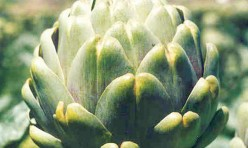 Emerald Artichoke Seeds