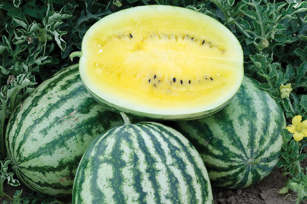 Lemon Krush F1 Hybrid Diploid Watermelon Seeds