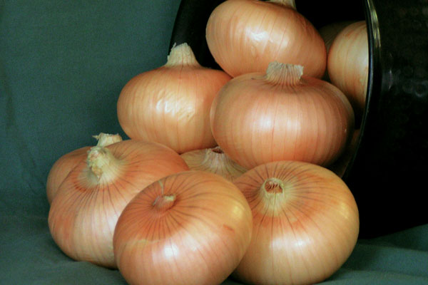 Mr. Buck F1 Hybrid Yellow Onion Seeds