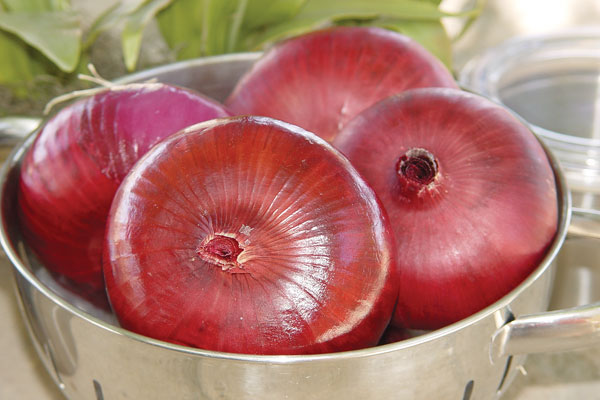 Pinot Rouge F1 Hybrid Red Onion Seeds