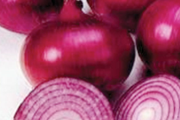 Red Creole OP Red Onion Seeds