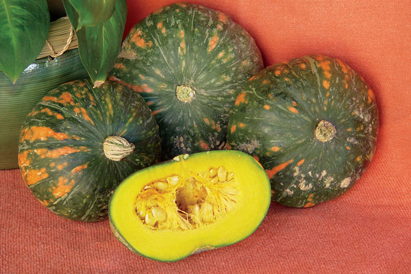 Speckled Pup F1 Hybrid Mini Kabocha Winter Squash Seeds