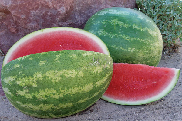 Sweet Eat'n F1 Hybrid Triploid Watermelon Seeds