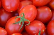 Uva Roja F1 Hybrid Indeterminate Grape Shape Tomato Seeds
