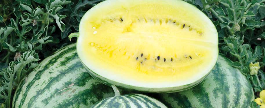 Lemon Krush Watermelon Seeds