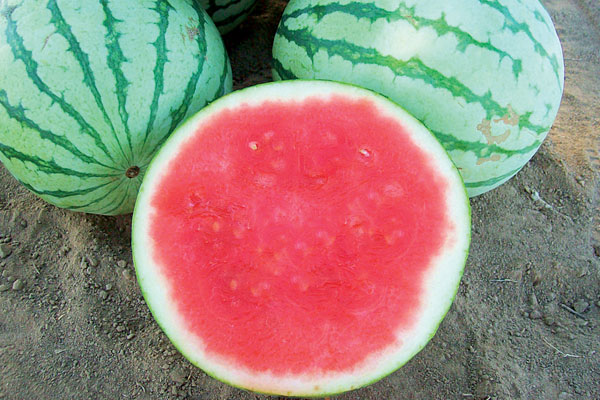 Vida Roja F1 Hybrid Triploid Watermelon Seeds