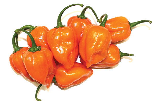 Yucatan F1 Hybrid Habanero Pepper Seeds – Sunrise Seed Inc ...