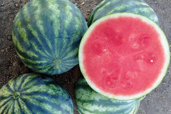 Li'l Red Rock F1 Hybrid Triploid Watermelon Seeds