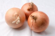 Saffron F1 Hybrid Yellow Onion Seeds